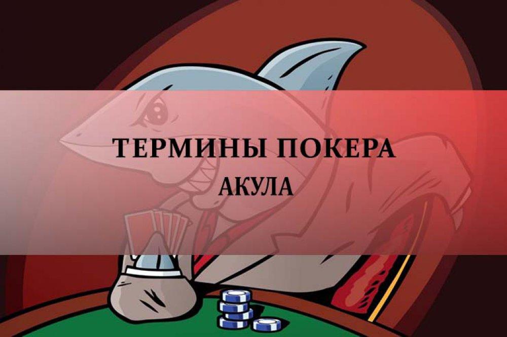 Акула в покере